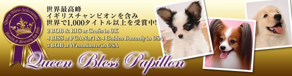 Papillon Breeder Griffin Kennel